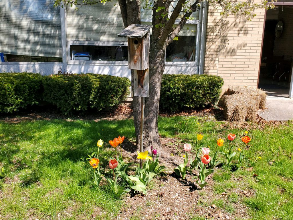 A tree surrounded by orange and yellow tulips.
