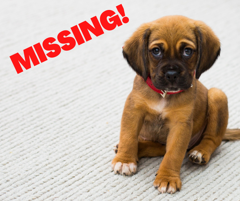 """an image of a sad-looking puppy with the word """"Missing"""" written in red ink"""